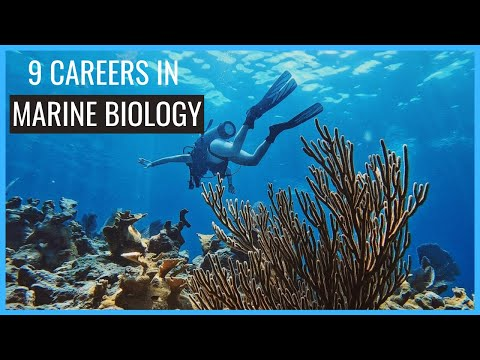 9 Careers in Marine Biology You Should Know About // Careers in Biology