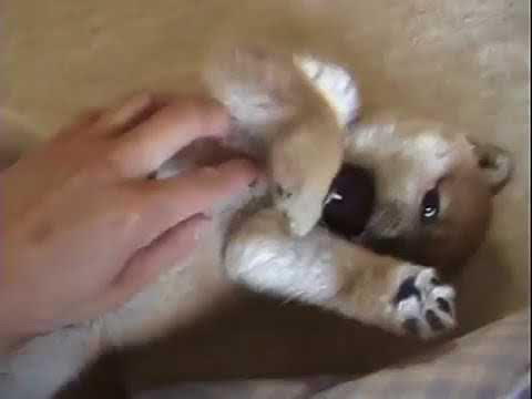 Cute is Not Enough | Funny Cats and Dogs Compilation | Pet Center p32