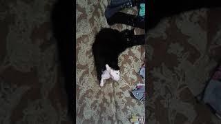 #CHALLENGE Как кошка с собакой