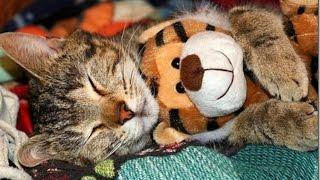 Любовь кошек к плюшевым игрушкам!Видео с кошками!