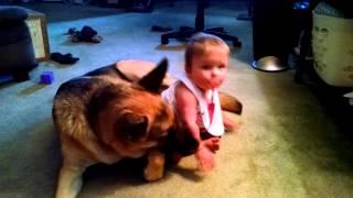 Vicious German Shepherd attacks baby.