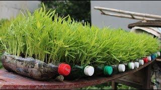 Chai Nhựa Qua Nhiều Thử Tai Chế Theo Cach Này  Too Many Plastic Bottles Try Recycling This Way