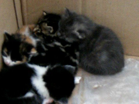 Cat and kittens on North Uist