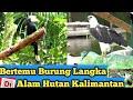 Hutan Kalimantan Banyak Burung Ayo Lindungi Hutan  Mp3 - Mp4 Download