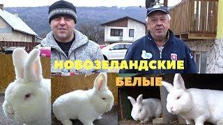 Новозеландские белые кролики Словакия.  Йозеф Скряб и Винсент Сурмик