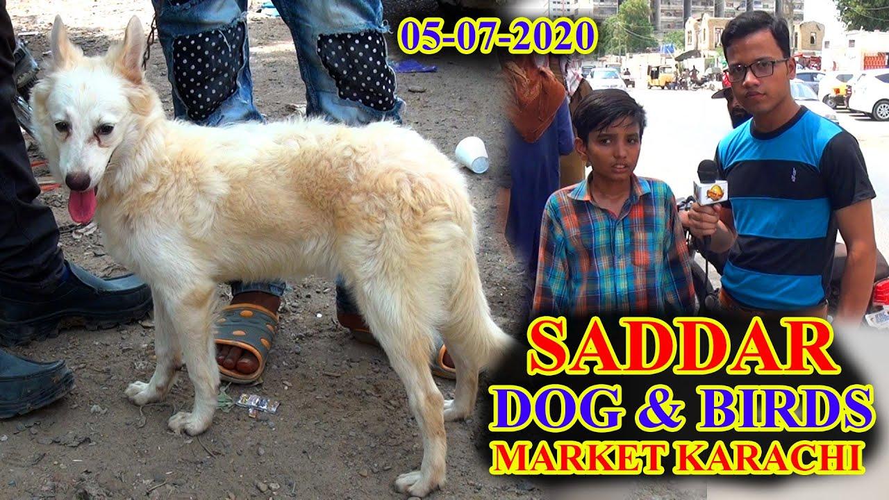 SADDAR DOGS AND EXOTIC BIRDS MARKET KARACHI 5-7-20 BEAUTIFUL  BIRDS UPDATES VIDEO IN URDU/HINDI