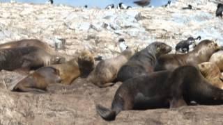 Chile Argentina Via Magellan Strait Beagle Channel Ushuaia Cape Horn Travels Neil Walker