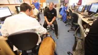 Compass The Therapy Dog Helps Young Child With Speech Therapy