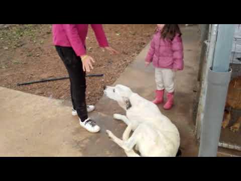 Sie sucht ihn mit hund