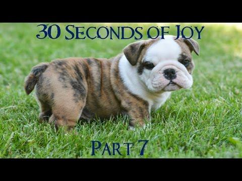 30 Seconds of Joy! Part 7! Smart Dog!?