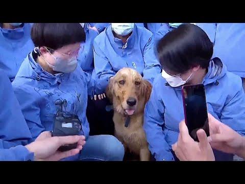 Coronavirus, i medici si prendono cura di un cane durante l'epidemia: l'addio è commovente