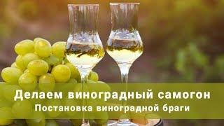 Постановка виноградной браги. Делаем виноградный самогон!