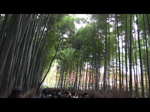 京都・嵐山 大堰川の左岸~大河内山荘~竹林の小径~天龍寺  Okochi Sanso Villa~Tenryu-ji Temple,  Arashiyama, Kyoto