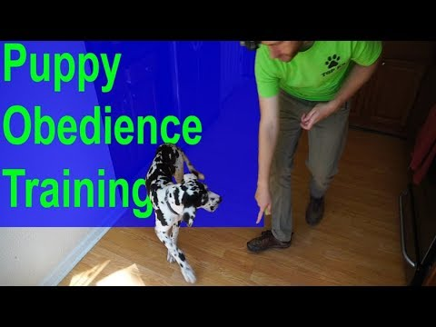 puppy-training---learn-to-train-your-puppy-basic-obedience-commands
