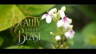 Download Beauty and The Beast ( Disney Cover ) | Alya Nur Zurayya ft. Memes & Kevin Ruenda Mp3