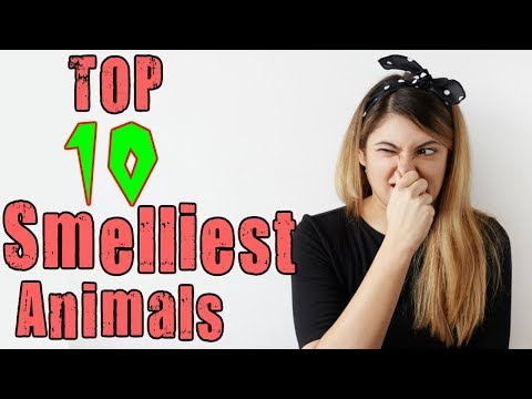 Top 10 Smelliest Animals In The World