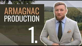 Armagnac production 1/7 - Harvesting and fermenting grapes