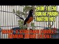 Stok Baru  Ekor Konslet Nembak Cililin  Kali Sold  Mp3 - Mp4 Download