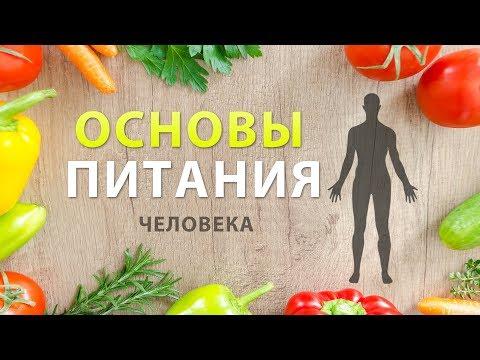 Основы питания. Правильное и здоровое питание человека