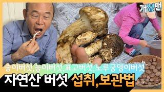 가을의 선물 버섯! 4종 먹는법, 보관법, 효능 / 송…