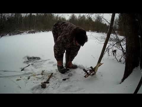 установка следового капкана на бобра с привадой под лед
