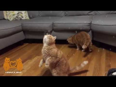 Watch These Cats Become Completely Hypnotized By Some Bubbles