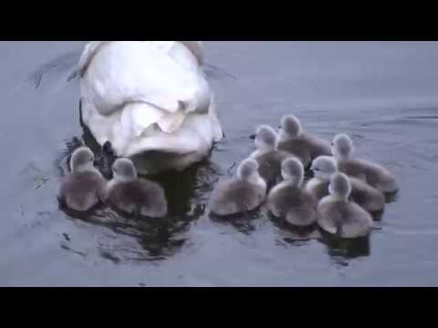 Mrs Victoria Swann's Babies - Day 4 - to the water!