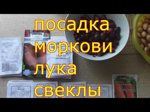Морковь и свекла на зиму: лучшие рецепты с фото
