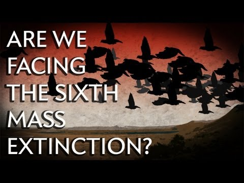 Are We Facing the Sixth Mass Extinction? - Instant Egghead #24