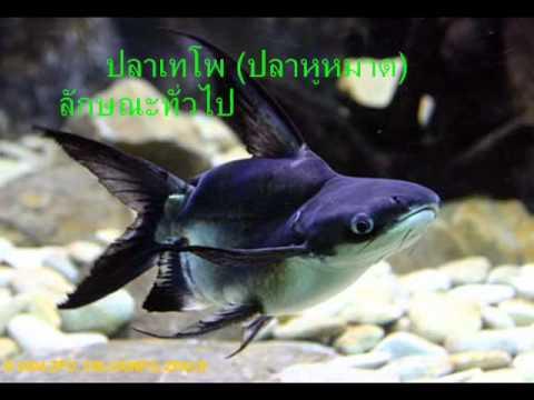 ปลาน้ำจืด