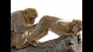 FUNNY GIF COMPILATION - NEW FUNNY ANIMAL VINES AND GIFS