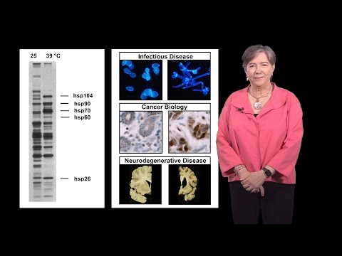 Susan Lindquist (Whitehead, MIT / HHMI) 1a: Protein Folding in Infectious Disease and Cancer