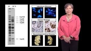 susan lindquist whitehead mit hhmi 1a protein folding in infectious disease and cancer
