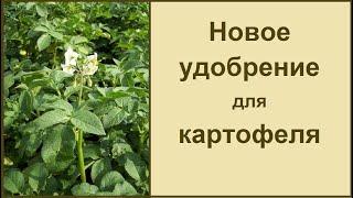 Подкормка и удобрение для хорошего урожая картофеля