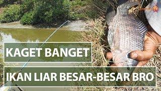 Sungai Jauh Dari Pemukiman Ikannya Super Besar Banget - Mancing Di Perairan Liar