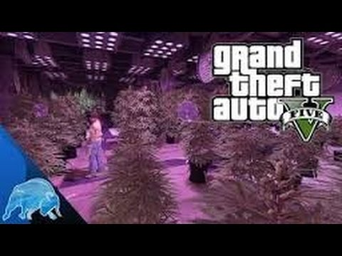 how to start a drug lab gta 5