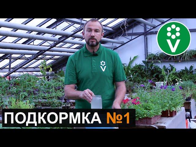 ПЕРВАЯ И САМАЯ ВАЖНАЯ ПОДКОРМКА томатов и огурцов после высадки в грунт