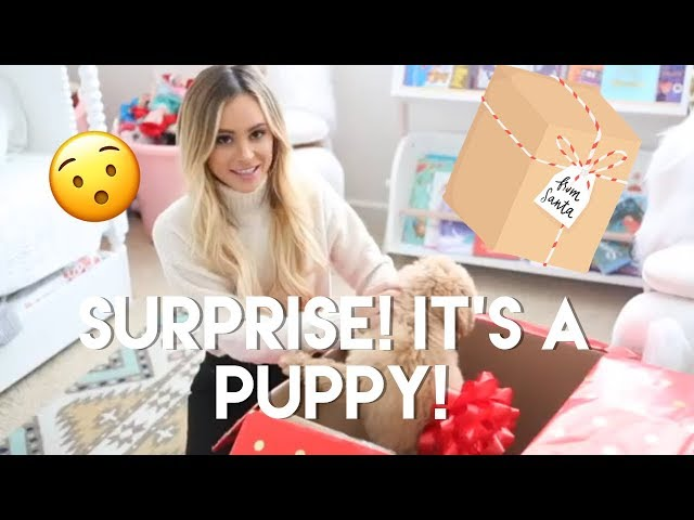 Kinsley + Charlie get an early Christmas present from Santa