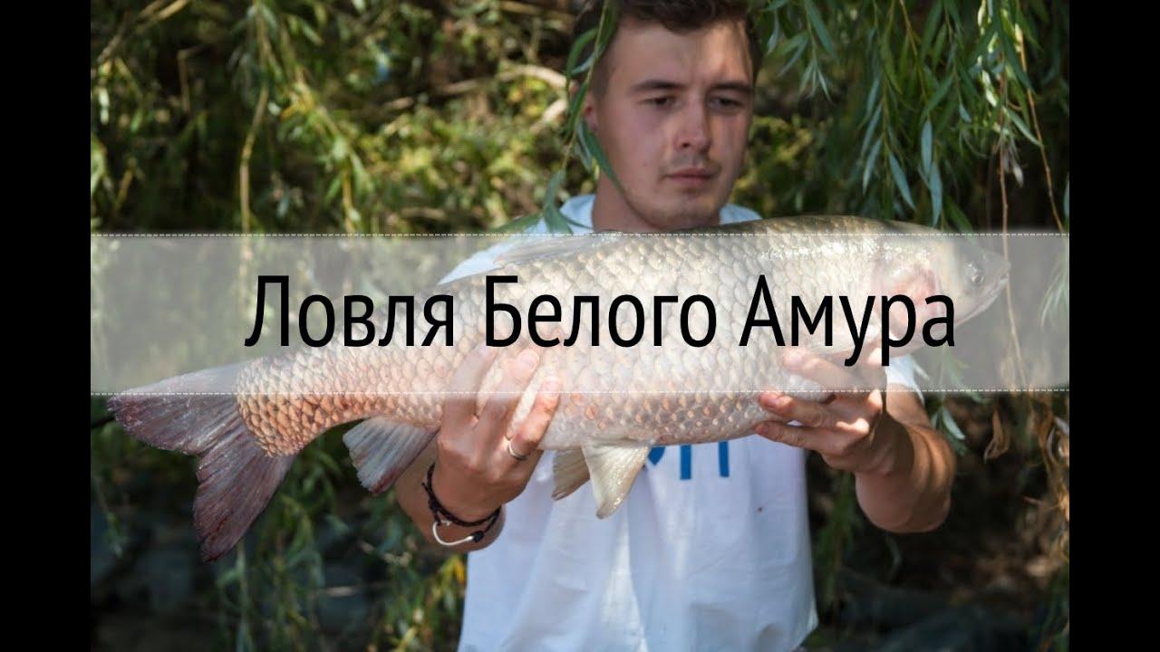Русская рыбалка 4 #16 - Наживка: Сыр, Линь и Белый Амур - YouTube