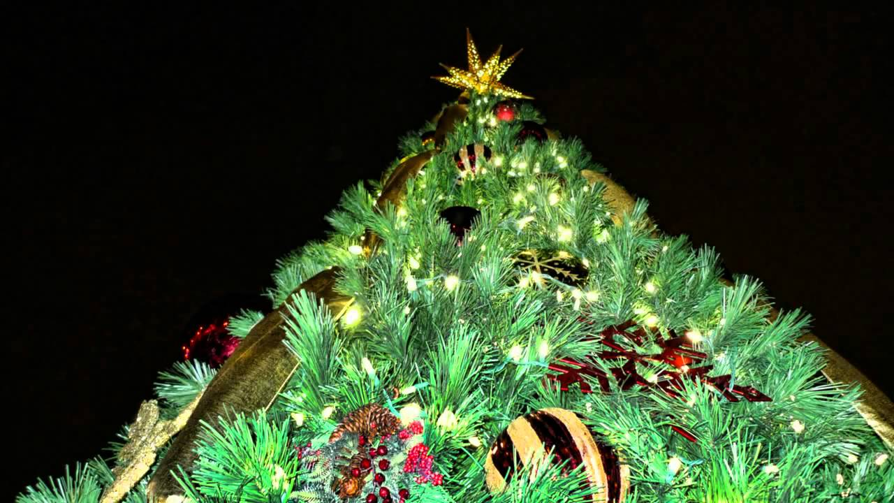 Christmas Decorations Myer : Ft myers christmas tree lighting by trimmer s holiday