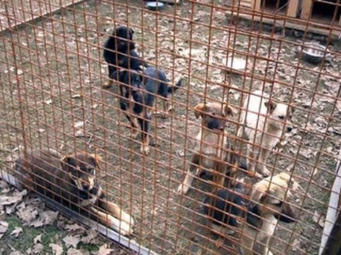Activists angry over Russian order to kill stray dogs in Soc