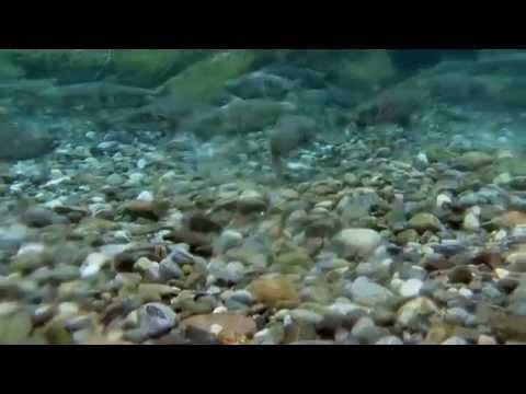 Fish Passage Restoration