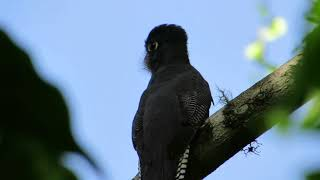 Birds and wildlife in Amboro National Park Bolivia/ Parque Nacional Amboro Bolivia