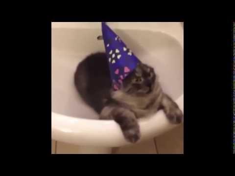 HArrypottercat