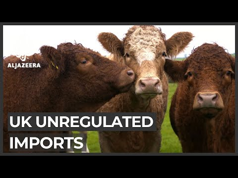 UK Trade Deals: Concern Over Unregulated Imports
