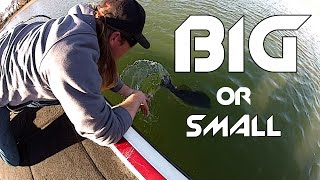 What Size Baits Should You Fish With?