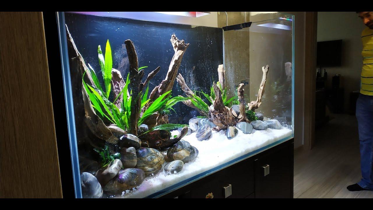 Запуск и оформление аквариума для цихлид.