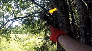 Зашел в лес и обнаружил на дереве это...