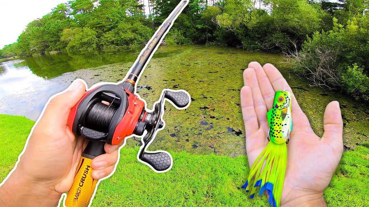 Searching for GIANT Bass w/ FROGS (Bank Fishing)