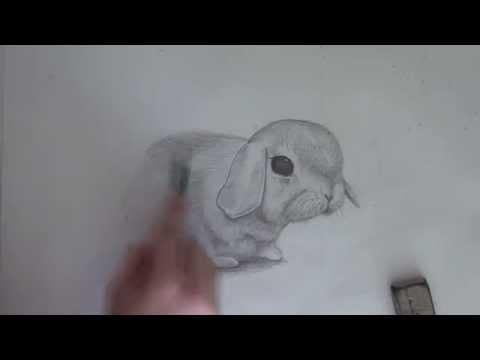 Как нарисовать собаку милый